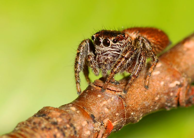 spider ...photo preview