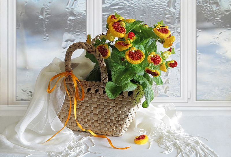 весна,натюрморт,корзина,цветы,шарф И все таки весна! С праздником!photo preview