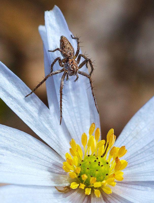 И пауки сладкое любят...photo preview
