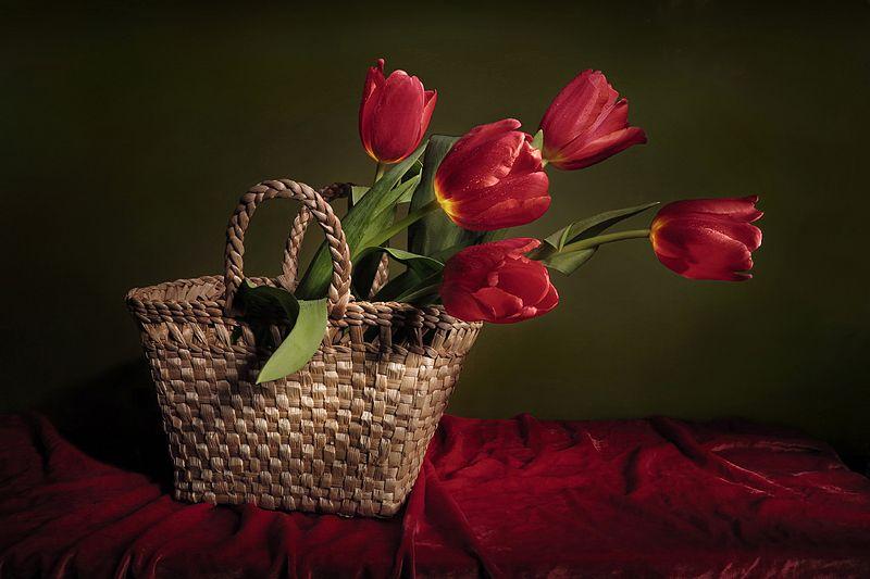 тюльпаны Красные тюльпаныphoto preview