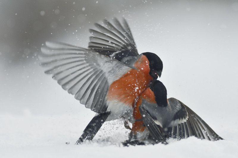Зимние схваткиphoto preview