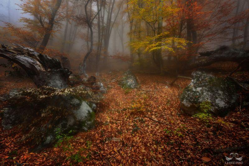 Про осень туманную ...photo preview