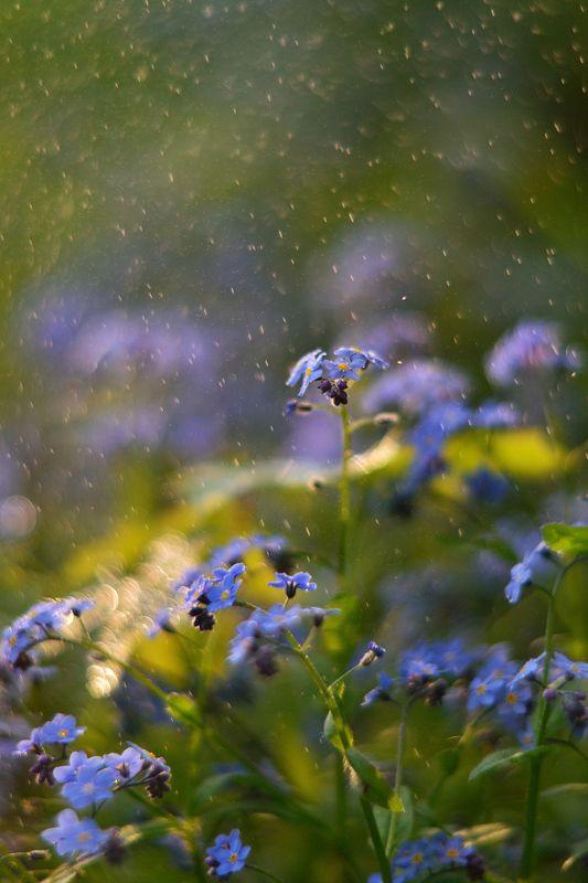незабудки, весна, цветы, лес Волшебный мир цветовphoto preview