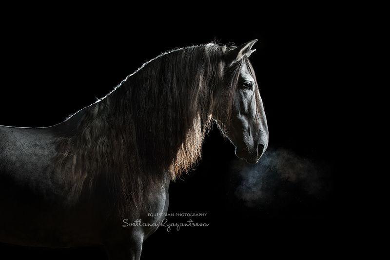 horse, лошадь, лошади, portrait the Dragon\'s breathphoto preview