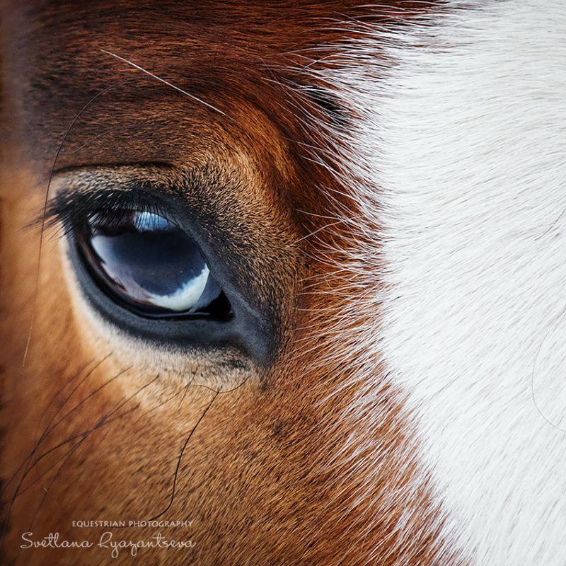 horse, лошадь, лошади, portrait отражениеphoto preview