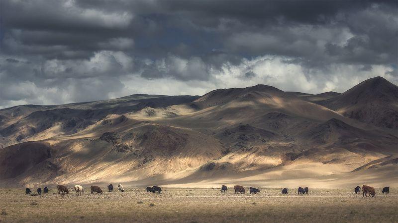 Небесные пастбища Монголииphoto preview