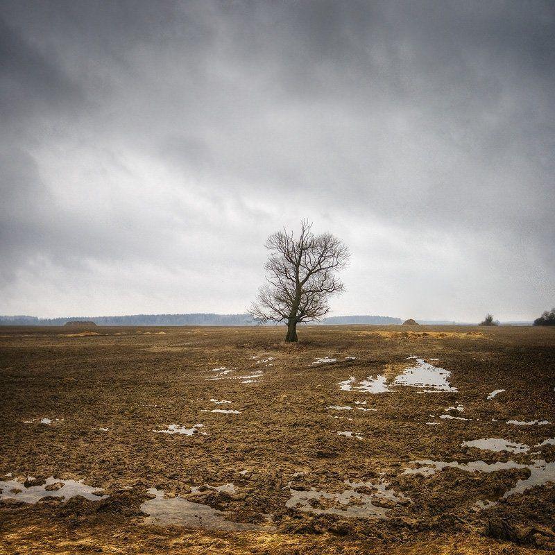 весна, пашня, талая, вода, одинокое, дерево | Земля дышит |photo preview