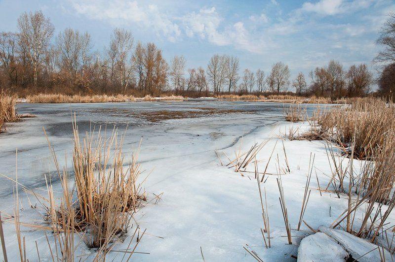 киев, десенка, март, весна, камыши, небо Весенний этюд..photo preview