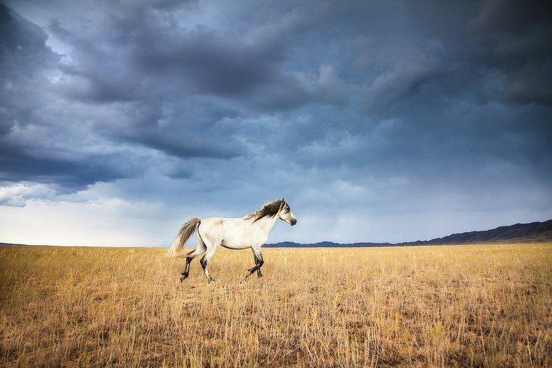 лошади, животные, природа, казахстан лошадиphoto preview