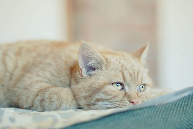 кот, кошка, котенок, кошки, рыбка, золотые рыбки, кролик друг человекаphoto preview