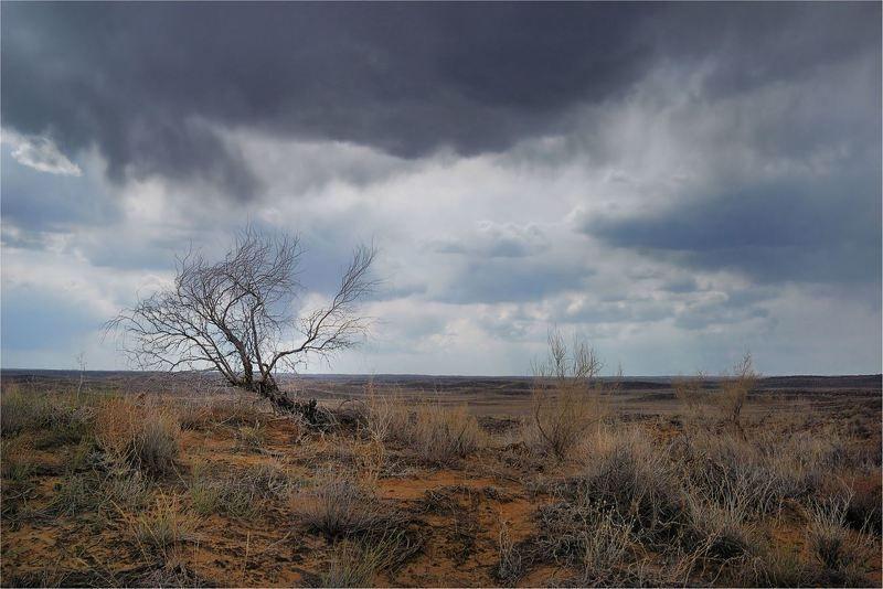 природа, , казахстан Перед   дождём...photo preview