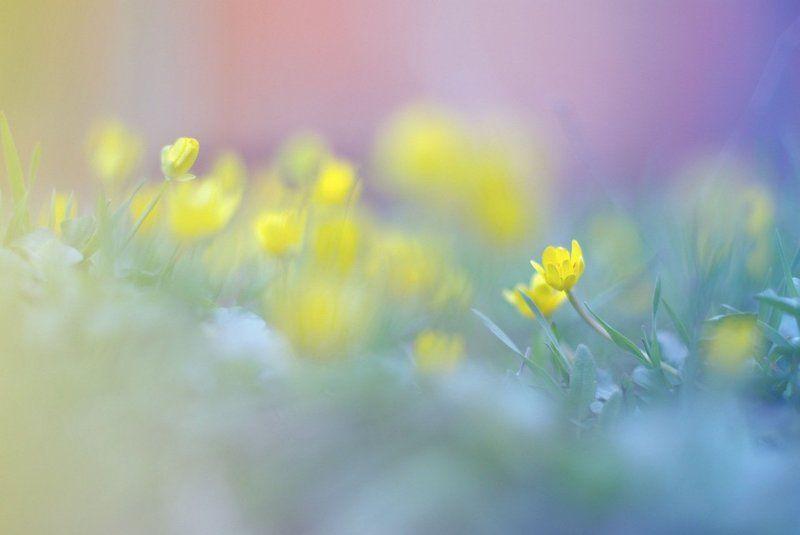 цветы, весна желтыеphoto preview