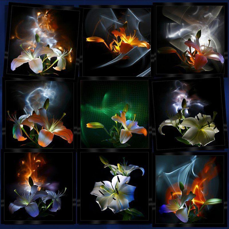 светографика, цветы, лилии, бутоны, динамический_свет, световые_сдвиги, натюрморт Лилии. Большие бутоны (Светографика - Цветы)photo preview