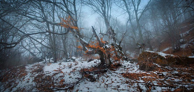 сумерки, демерджи, крым Как приснилась лесу осень..photo preview