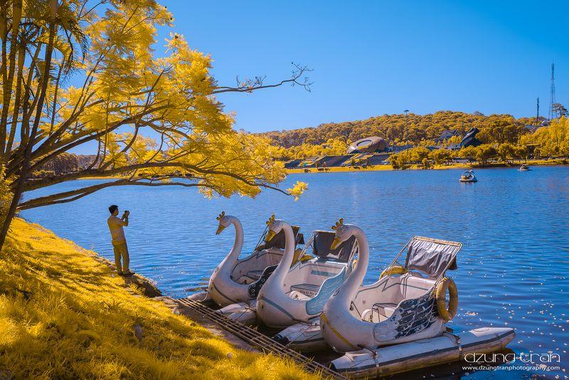 Swan lakephoto preview