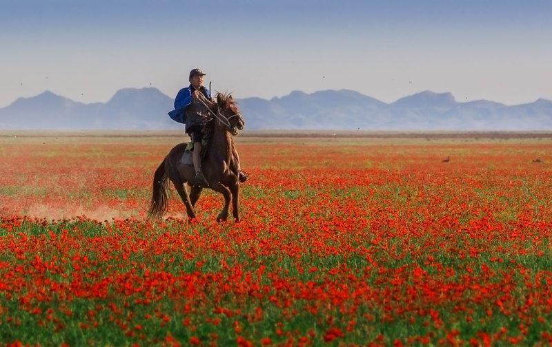 киргизия, маковые поля Из под топота копытphoto preview