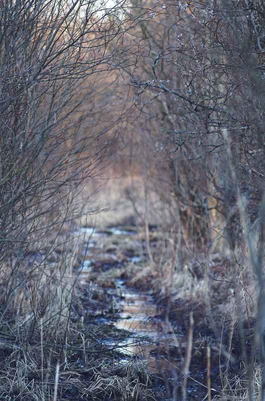 Еще рано любоваться красотами наших болот....photo preview
