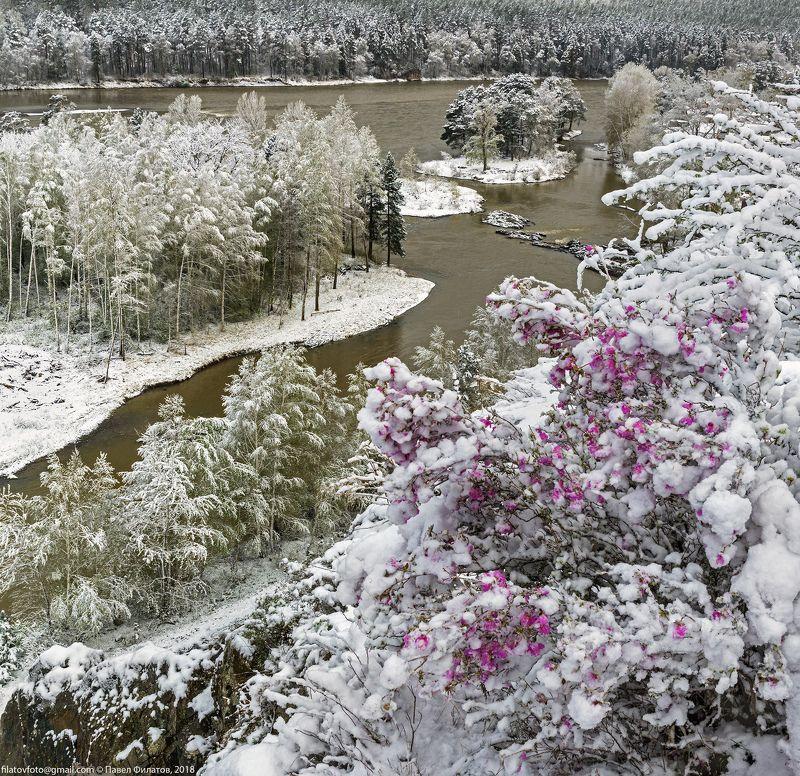 алтай, сибирь, снег, весна, маральник, рододендрон, цветение, катунь Снега и маральникphoto preview