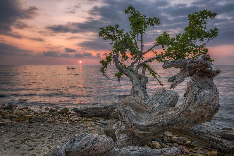 пейзаж, остров,закат,Чанг,таиланд,путешествия,дерево,морской, Закаты заморских морей.photo preview