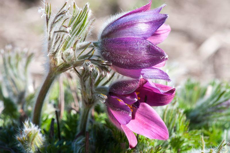 flowers,spring,purple,blossom springtime...photo preview