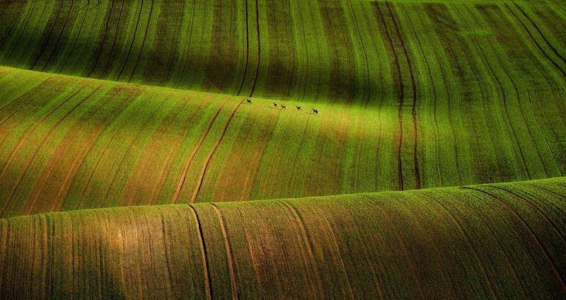 moravia, nature, green, tuscony Moravia Tusconyphoto preview
