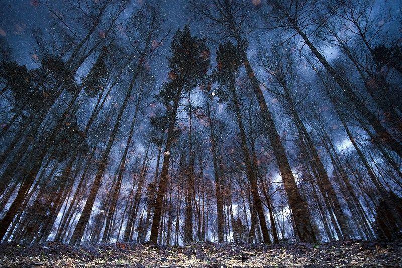Призраки осенних звездphoto preview