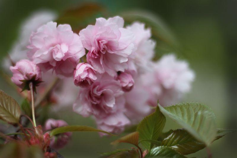 весна, цветы ***photo preview