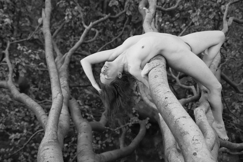 Wald, Baum, Nienhagen rücklingsphoto preview