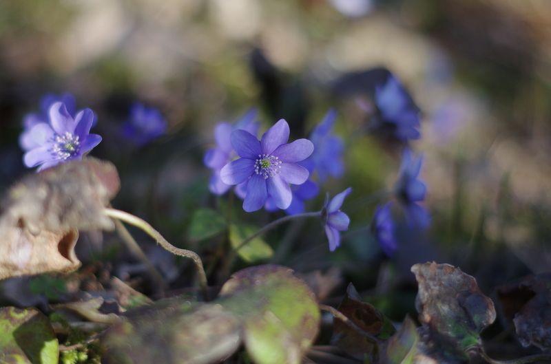 Весна в лесуphoto preview