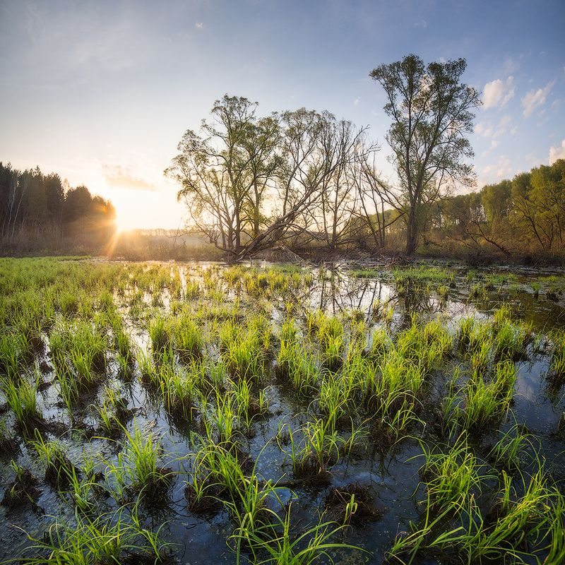 пейзаж, утро, май, восход, рассвет, болото,morning, sun, sunrise, landscape Майское утро на болотеphoto preview