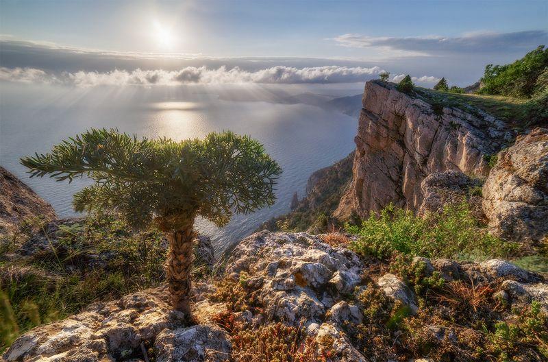 пейзаж, море, горы, весна, крым, дерево \