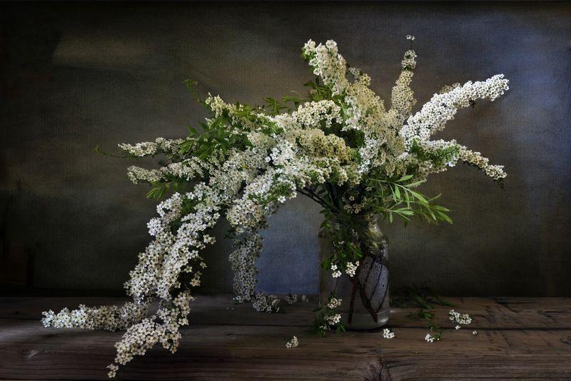 весна май цветы букет натюрморт С букетом спиреиphoto preview