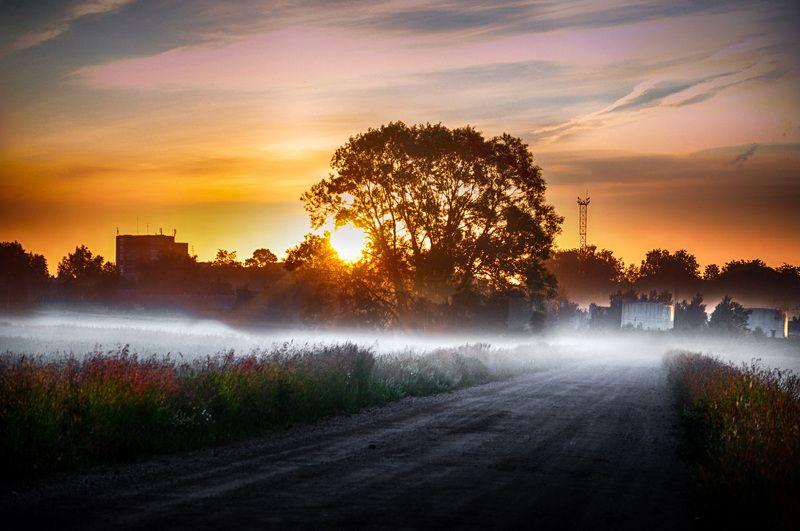 пригород, туман, утро Пригородphoto preview