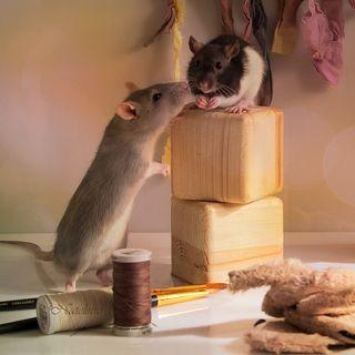Кошки - Мышки. Лепим, шьём, творим )