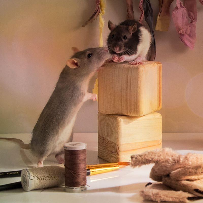 котенок крысенок натюрживчики натюркотики крысята творчество Кошки - Мышки. Лепим, шьём, творим )photo preview
