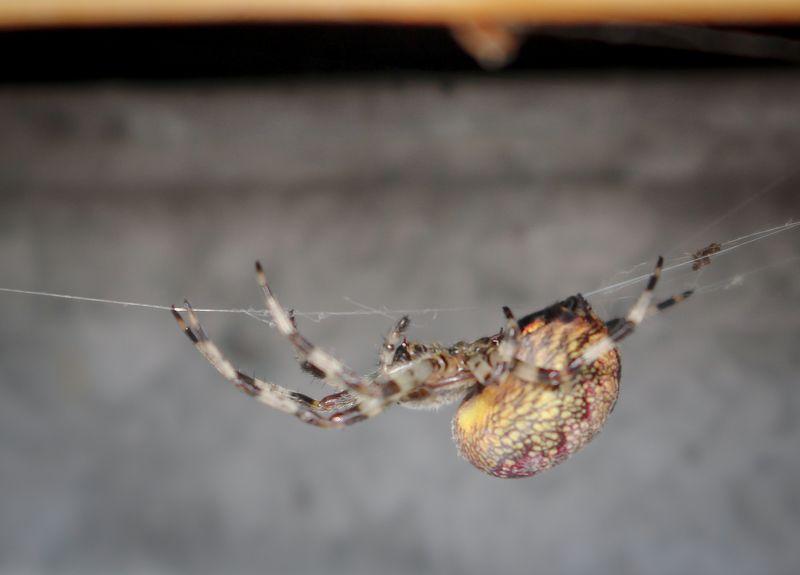 паук паутина ползёт макро насекомое лето Паукphoto preview
