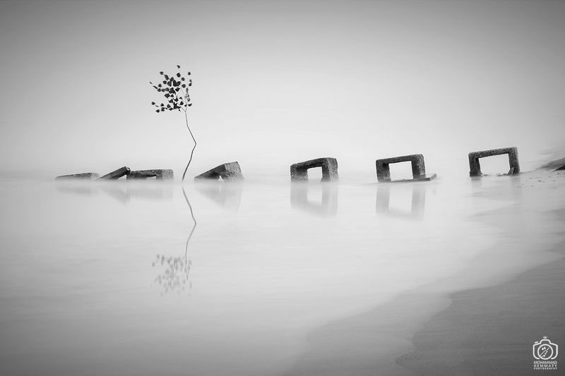longexposure,canon80d,tree,sea,nature,fog,black&white,canon,photo,photographer A Tree in the seaphoto preview