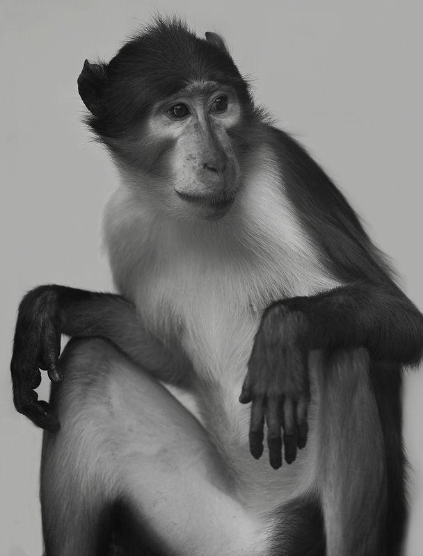 Mongabay monkeyphoto preview