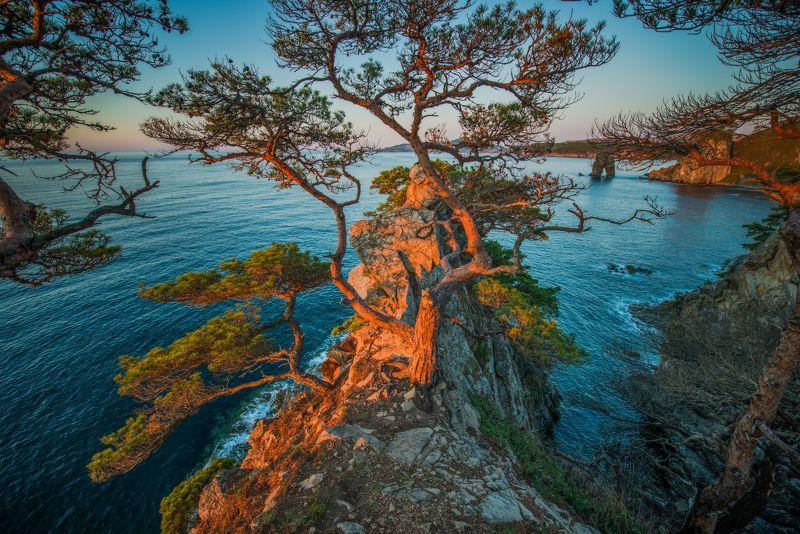 Рассвет, сосны, Гамова, Приморский край Хасанские мотивыphoto preview