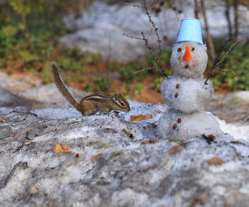 бурундук, якутия, нерюнгри, снеговик, весна, май Бурундук и снеговикphoto preview