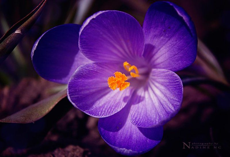 Spring flowersphoto preview
