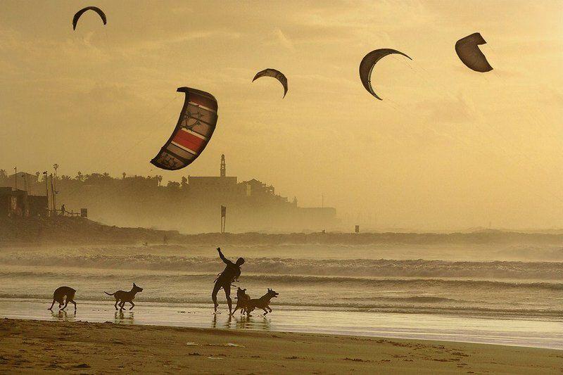 кайтсёрфинг, море, закат, собаки, игрок Ideal Playerphoto preview