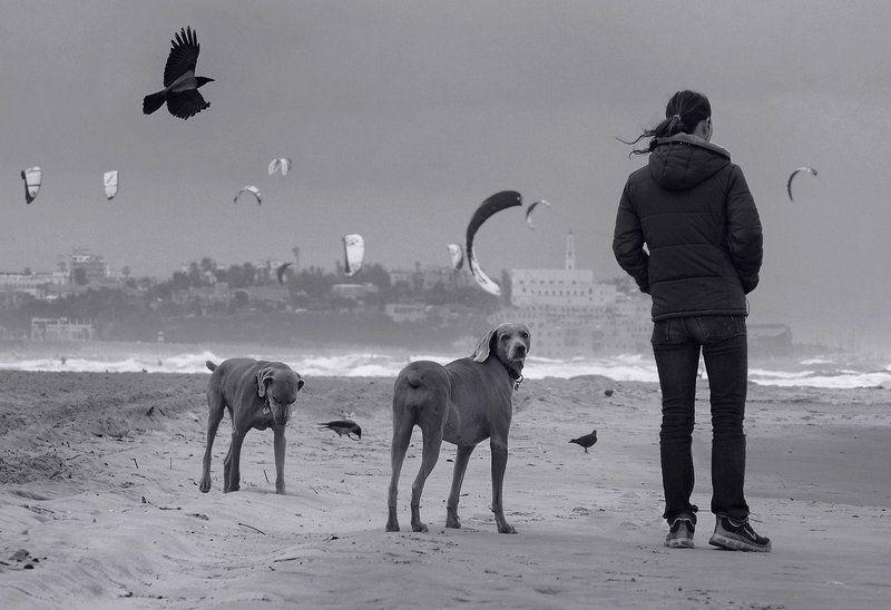 ветер, крылья, собака, кайт, человек earth, wind and wingsphoto preview