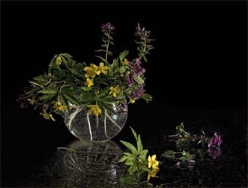 эфемероиды, хохлатки, ветреницы, ваза, вода Эфемероидыphoto preview