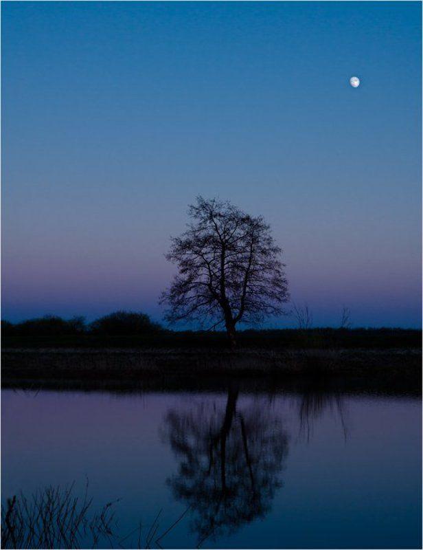 Дерево и луна.photo preview