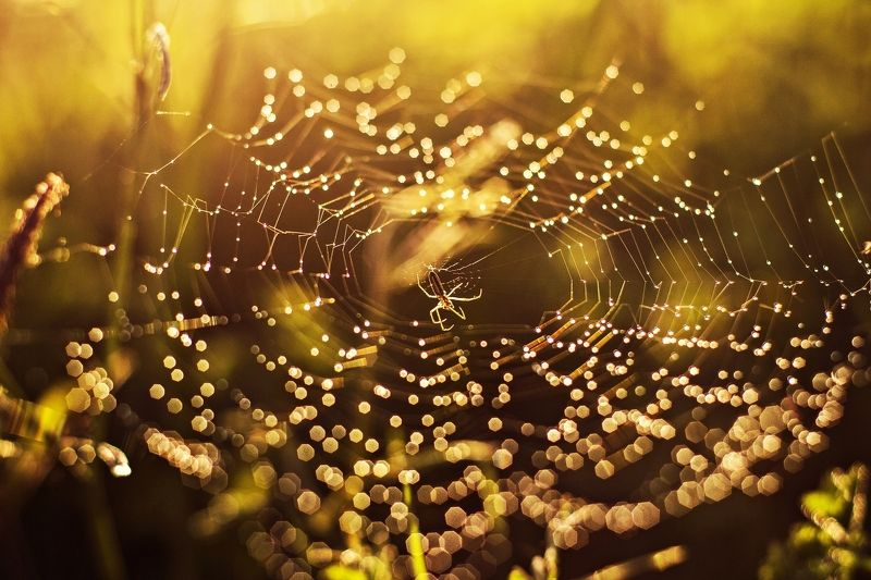 nature, evening,  Spider*photo preview