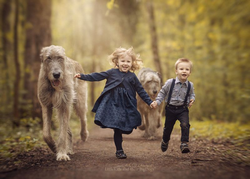 Irish Wolfhoundsphoto preview