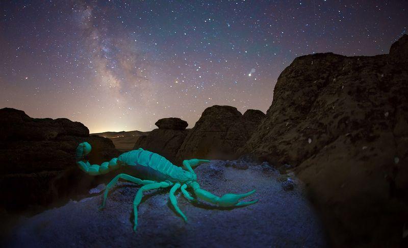 скорпион, ночь, звезды, млечный путь, дагестан, ультрафиолет, флюорисценция  В созвездии стрельца и скорпионаphoto preview