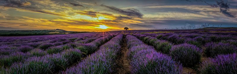landscape, lavender, lavender field, countryside The Lavender Paradisephoto preview