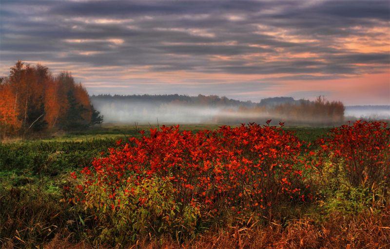 туман, кусты, осень, латвия, листва, тучи, закат Низко стелется туманphoto preview